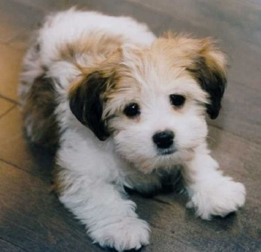 Looking For A Small Pup To Adopt