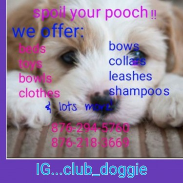 Doggie Items ,beds ,bowls,clothes .ect