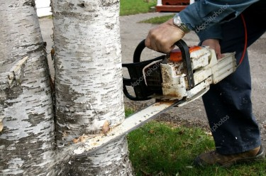 Two Man And A Saw Removal Services Depends On Size Of The Job