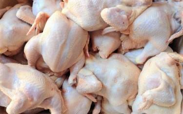 For Sale: Fresh Chicken