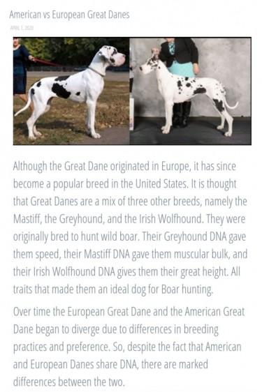 Great Dane Puppies (1 Left)