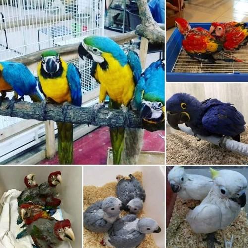 Diferent Kind Of Parrots For Sale