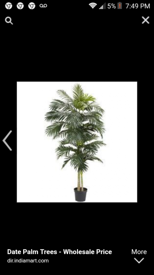 I'm Selling Palm Tree And So On Now,come On