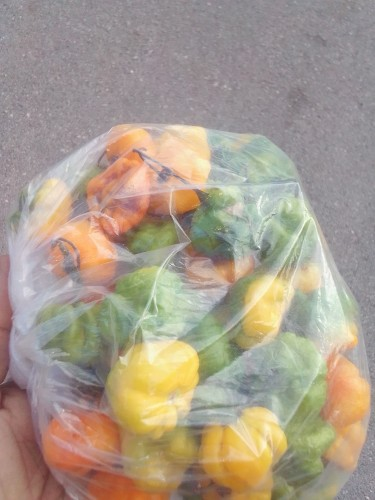 Hot Peppers For Sale Very Hot 300 Dollars Per Pou