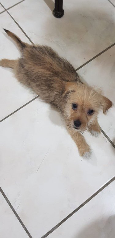 10 Weeks Old Puppy For Sale