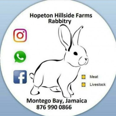 Healthy Affordable Rabbits