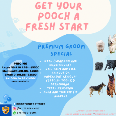 Dog Grooming Special!