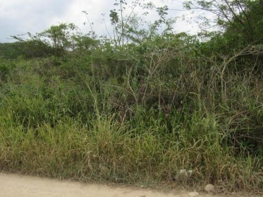 1/4 Acre Residential Lot For Sale On Selassie Rd